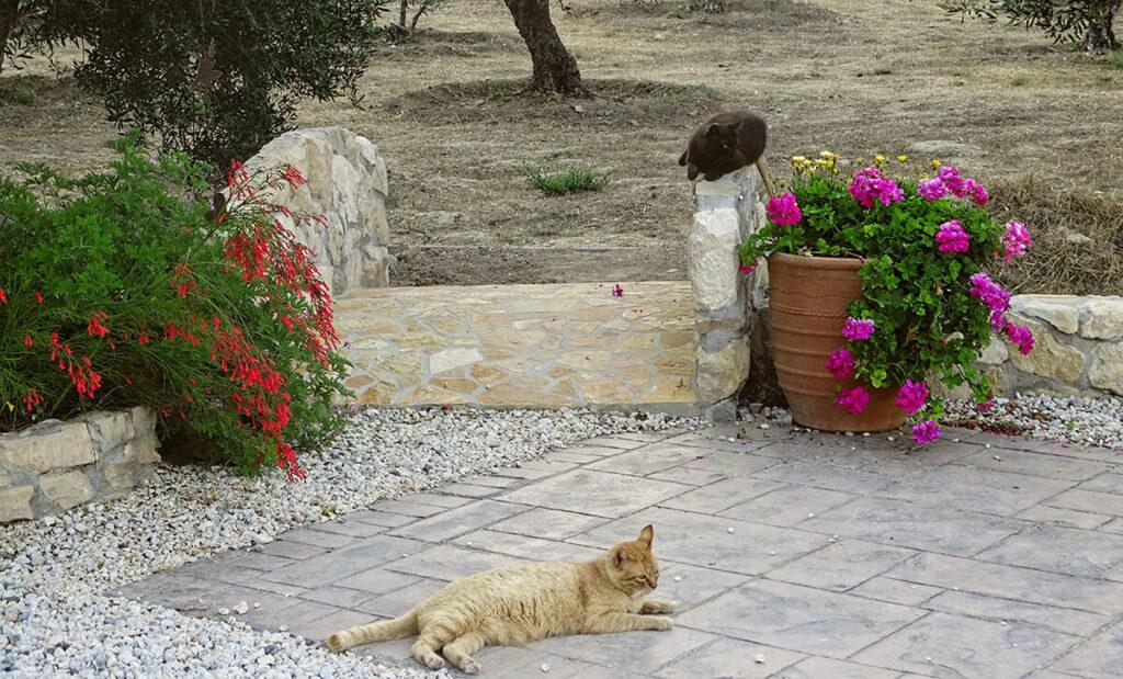 villa-dianthe-garden-2020-05